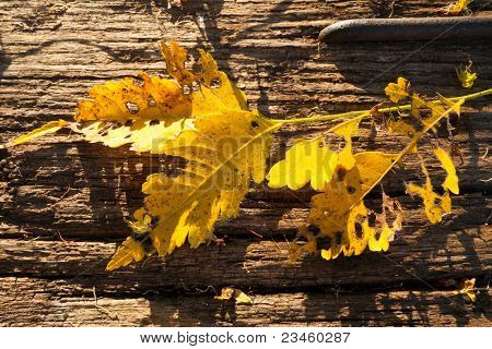 Yellow leaves on wood
