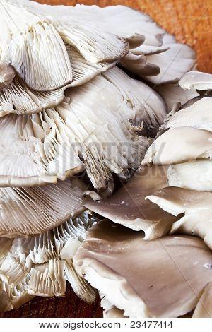 Pleurotus  Mushroom