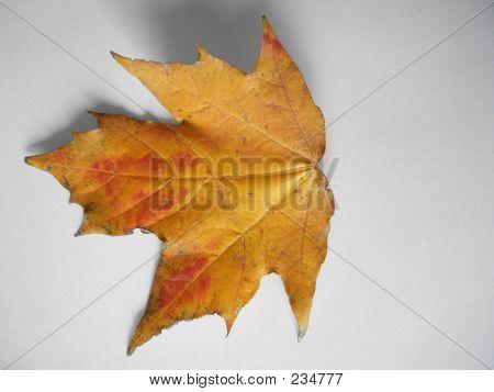 Leaf 005