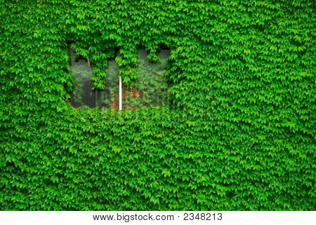 The Wall Of Green