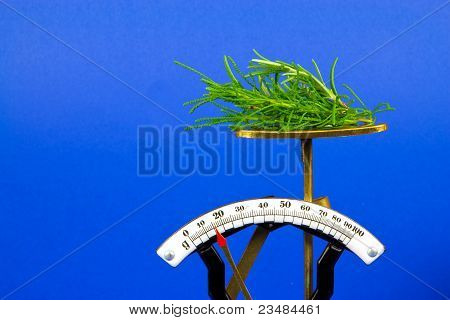 Herbs (santolina Virdis) On A Scales