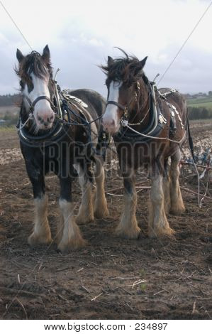The Ploughing Team