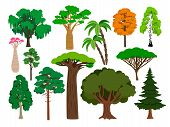 Cartoon Trees. Vector Green Tree Set, Brachychiton And Rowan, Palm And Willow, Maple And Poplar Fore poster