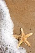 Постер, плакат: Морская звезда