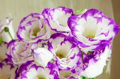 bouquet of vivid flower lisianthus poster