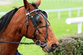 foto of blinders  - Horse Racing after the raceequestrian sport outdoor - JPG