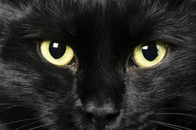 stock photo of black cat  - domestic animals - JPG