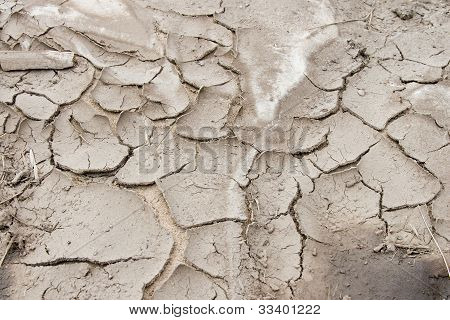 Grey Dry Land With Cracks Close Up