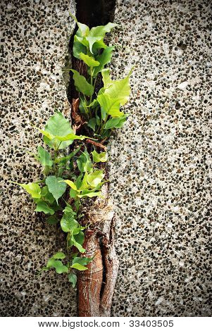 Plant in Wall Crack