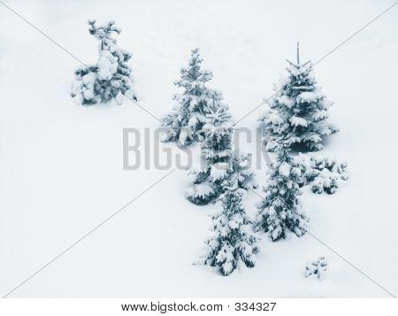 Trees / Snow