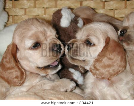 Puppies Sparring_