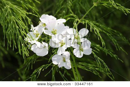 Bright White Flowers Among Green Plants