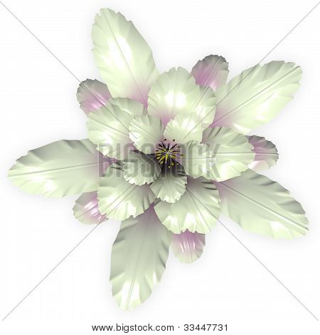 A White Echinopsis Cactus Flower Isolated On White