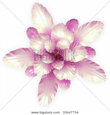 A Pink Echinopsis Cactus Flower Isolated On White