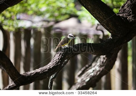 Bird Sitting On A Tree Jacaranda