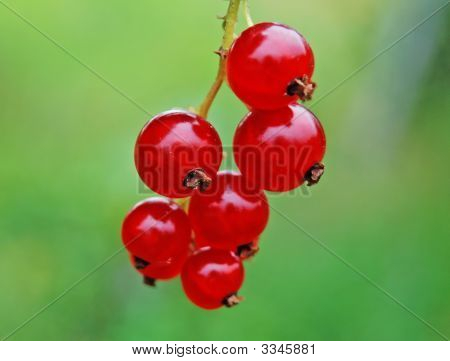 A Currant Is Red.