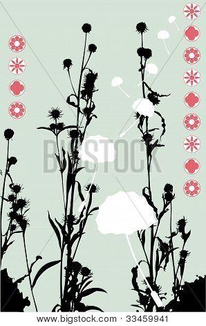 Asian Weeds