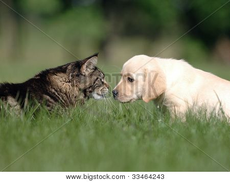 dog and cat .Introduction
