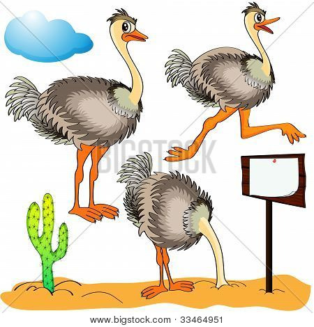 Ostrich Runs, Covers Head Sand And Cost(stand)s On Background Cloud And Cactus
