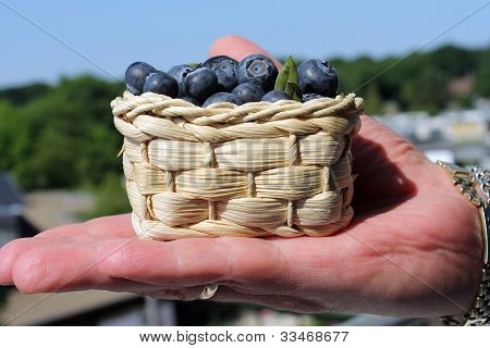 basket with blueberries in the palm