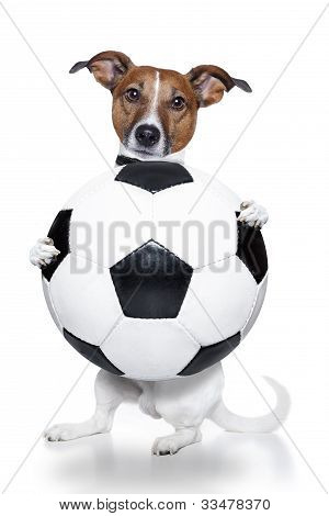 Dog With A White Soccer Ball