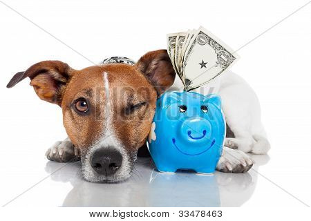 Dog With Piggy Bank