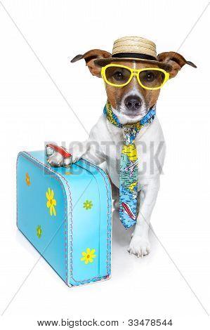 cão de turista