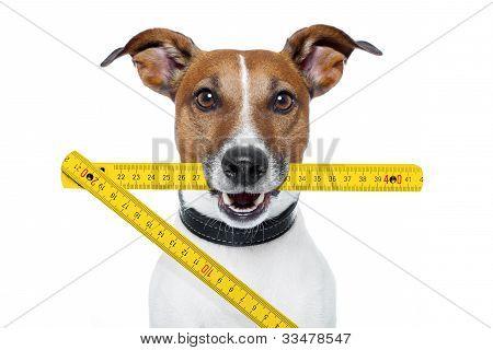 Perro de manitas con una regla plegable amarillo
