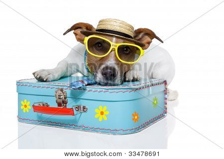 tourist dog with hat and a bag