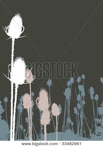 Bull Thistle on Brown