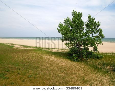 Tree by Beachfront