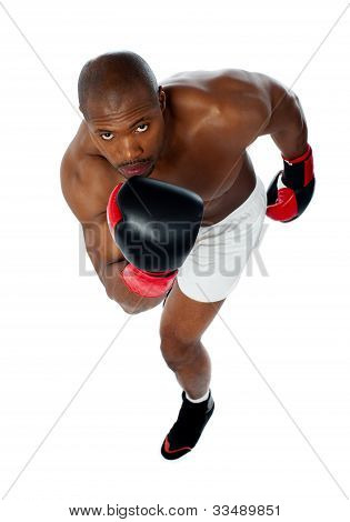 Portrait Of Aggressive Male Boxer