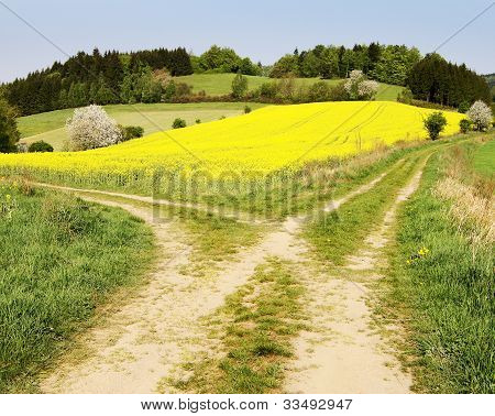 view on field path and yellow rapeseed field - bohemian and moravian highlands