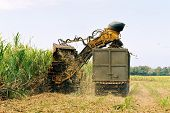 stock photo of sugar industry  - An image of a machine cutting sugar cane and loading it on a lorry - JPG