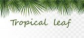 Collection Tropical Exotic Palm Leaf. Tropical Palm Leaves Isolated On Transparent Background. 3d Re poster