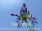 Inspirational Quote - Good Morning. Do Good & Good Will Come Back To You. With Beautiful Purple Tuli poster