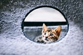 Young Bengal kitten looking out from the whole. Funny animals poster