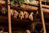 Group Of Corn Cobs Hanging From The Roof To Dry In The Sunlight. Medieval Village Of Canale Di Tenno poster
