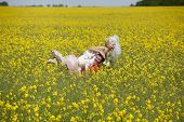 Newlyweds in canola fields