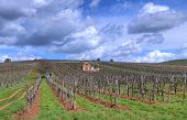 picture of tokay wine  - Vineyard in the Tokaj hills in North Hungary - JPG