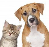 stock photo of puppy kitten  - Kitten and puppy - JPG