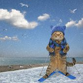 Cat Skiing Along The Sea 2 poster