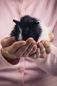 A Close Up Shot Of A Girl Holding A Pet Guinea Pig In Her Hands. Pet Love Concept. Favourite Pet Enj poster