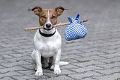 stock photo of homeless  - homeless dog holding a bag with a stick - JPG