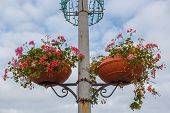 Hanging Pots With Flowers On The Old Street Lamp Post. Bottom View Of Street Flower Pots With Bloomi poster