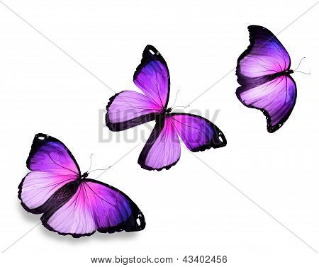 Three Violet Butterfly, Isolated On White Background