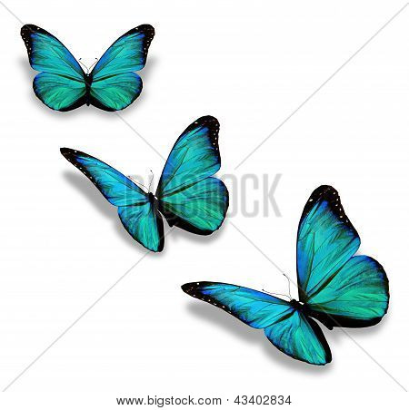 Three Turquoise Butterflies, Isolated On White