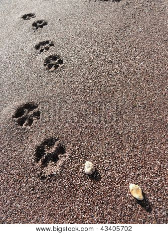 Beach Dog Pawprints