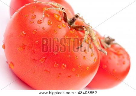 Wet tomatoes on the white background