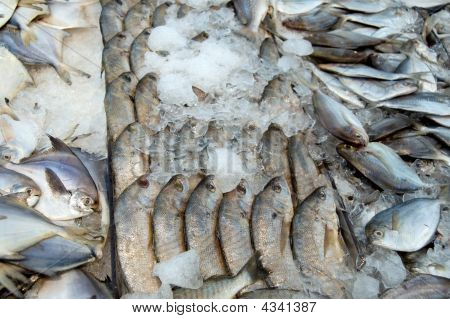 Fish In Supermarket